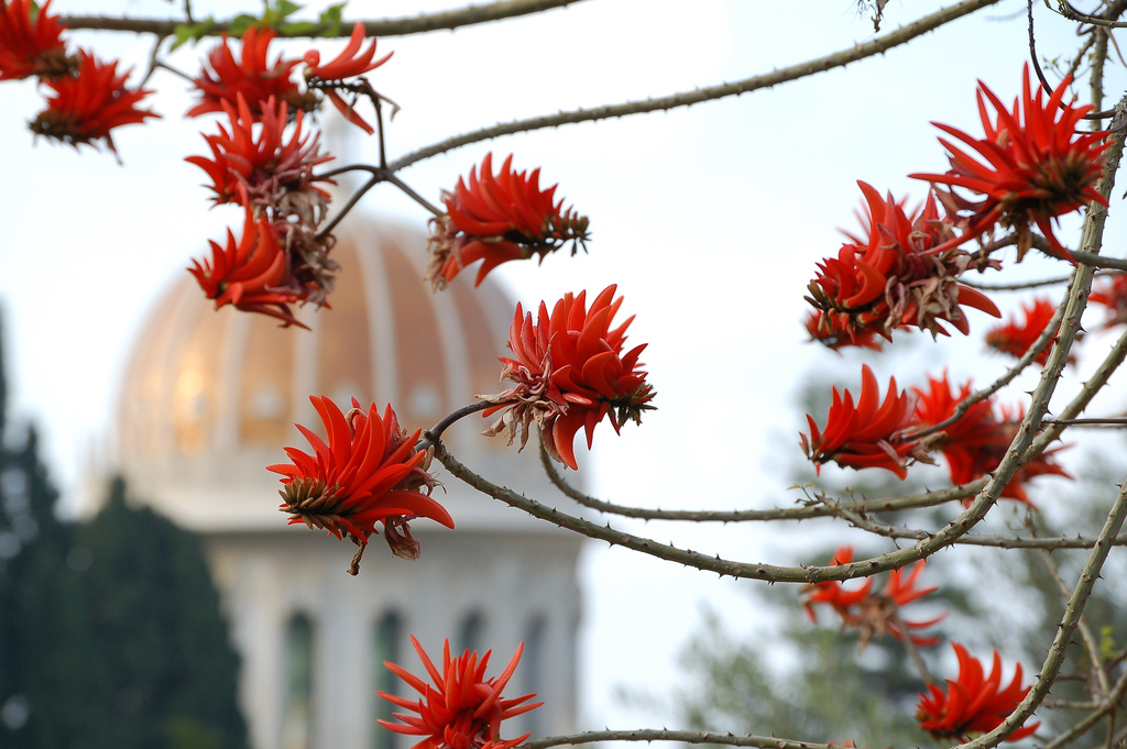 Online Balloting System Open for Delegate Election